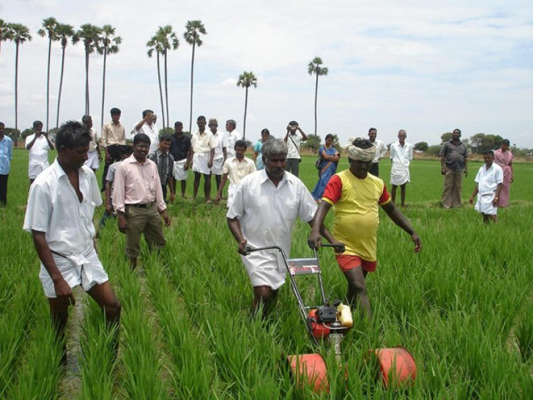 Farmers Association to buy rainy season paddy | DVB