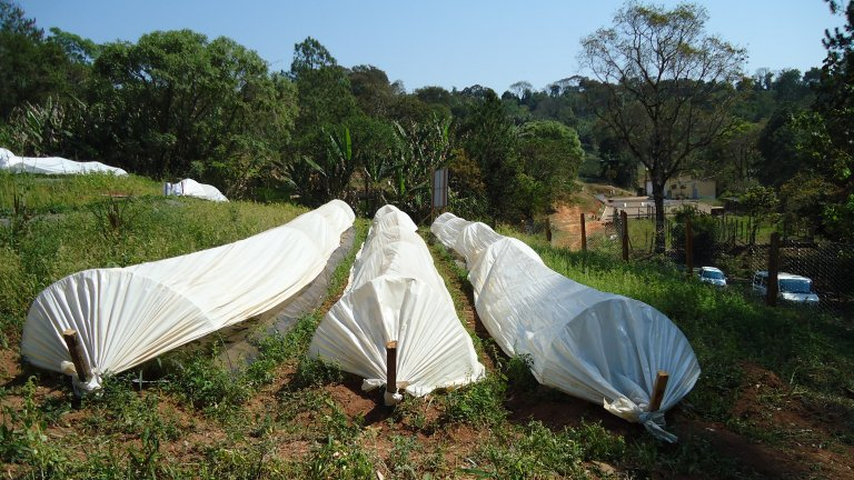 3 Low plastic tunnels in the BERRYSYS strawberry field in Minas Gerais in Brazil Photo Ingeborg Klingen_cropped
