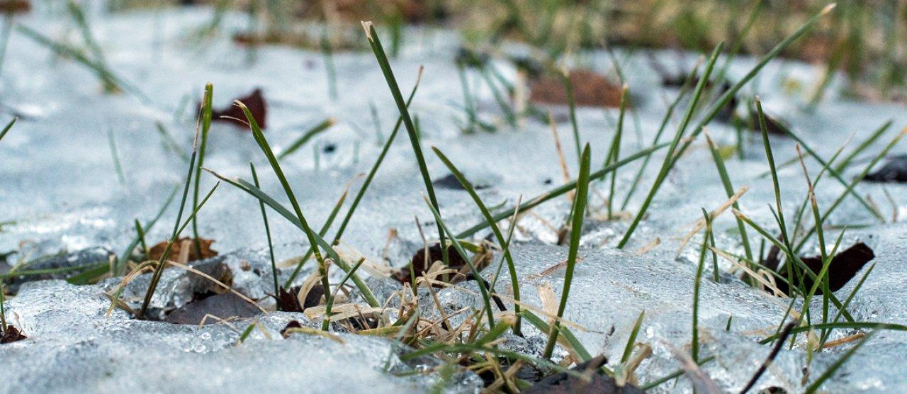 isbrann på plen