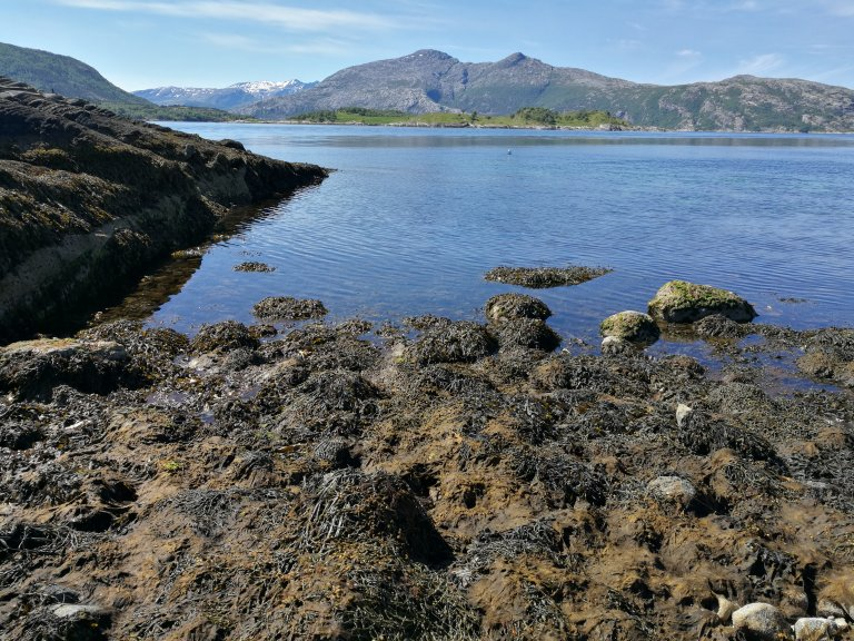 Intertidal at Storvika.jpg